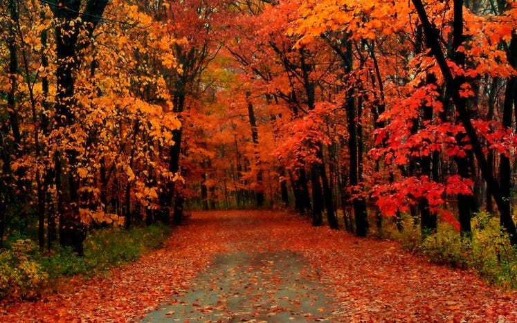 Fall foliage timeline for Southeast Michigan
