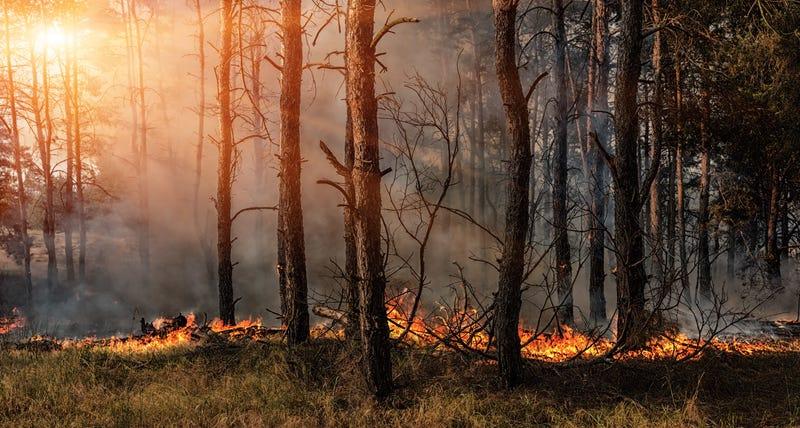 brush wild fire