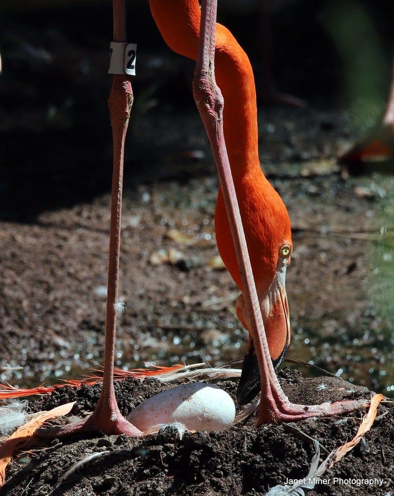 Philadelphia Zoo Flamingo
