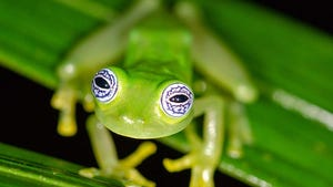 Kermit The Frog Radio Com Here we encourage you to post kermit memes about any subject. kermit the frog radio com