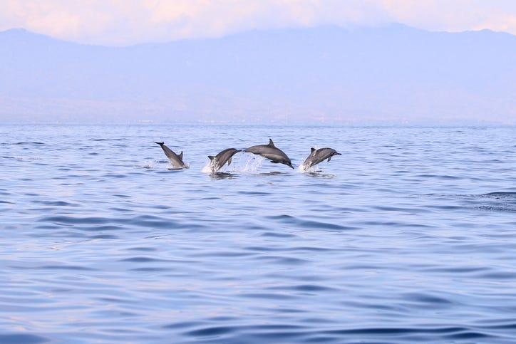 A stampede of dolphins