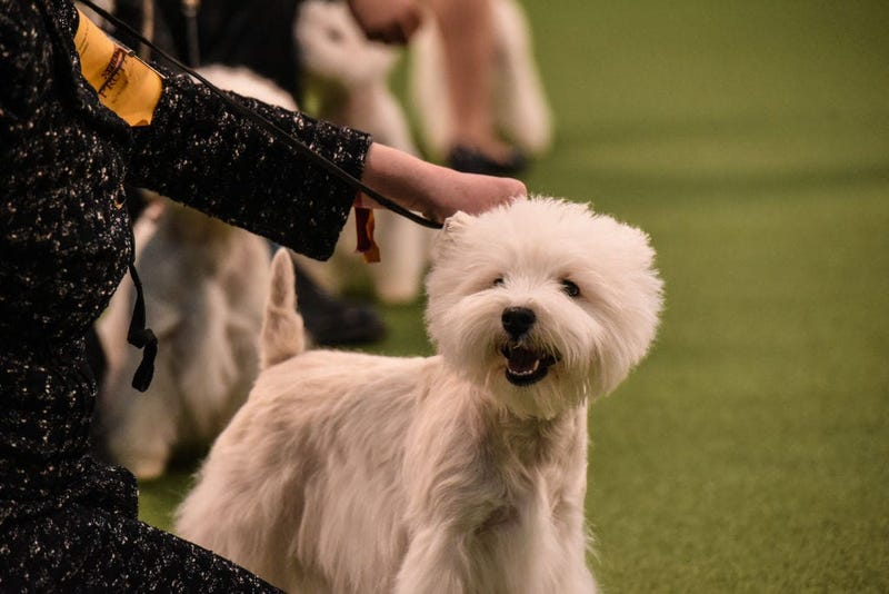 144th annual Westminster Kennel Club Dog Show