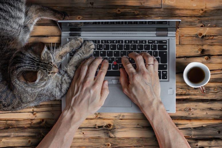 Cat, Laptop, Computer, Coffee, Desk, Table, Hands