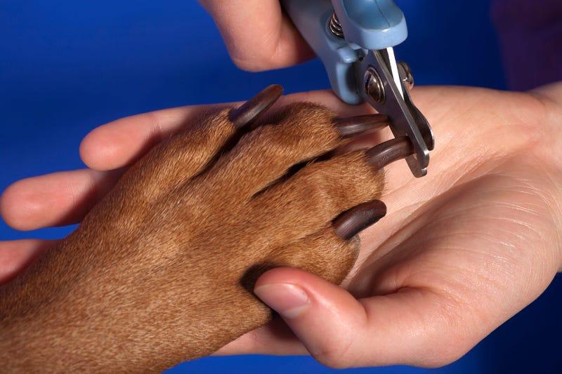 Dog Nail Trim