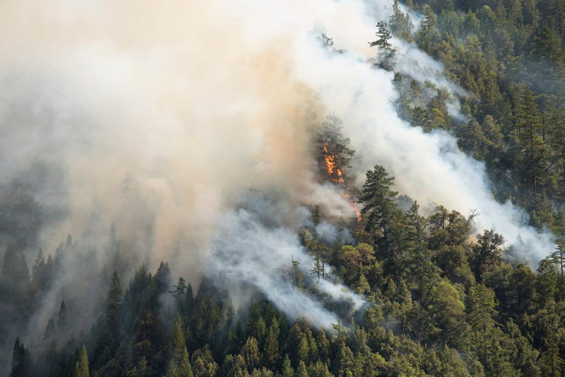 redwoods on fire
