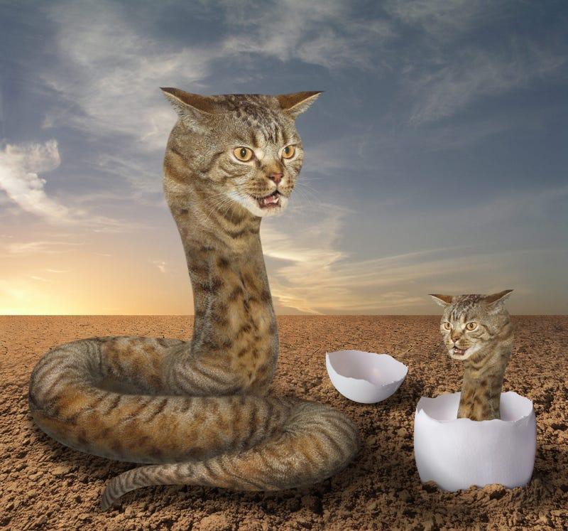 Dead Cat Pet Store Snake