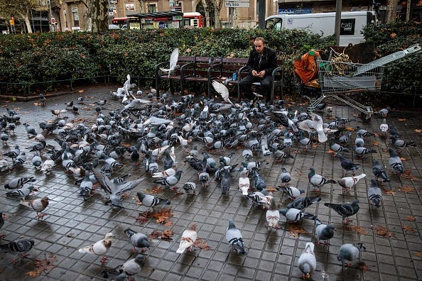 A man feeds pigeons in Barcelona.