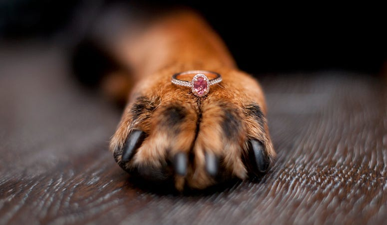Dog, Paw, Engagement Ring