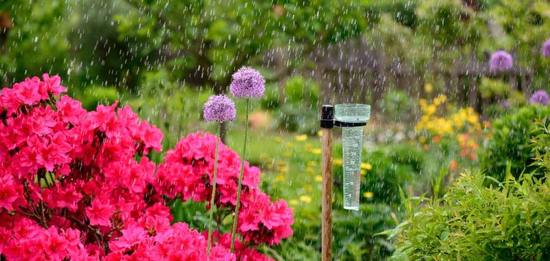 Rain Gauge In A Garden