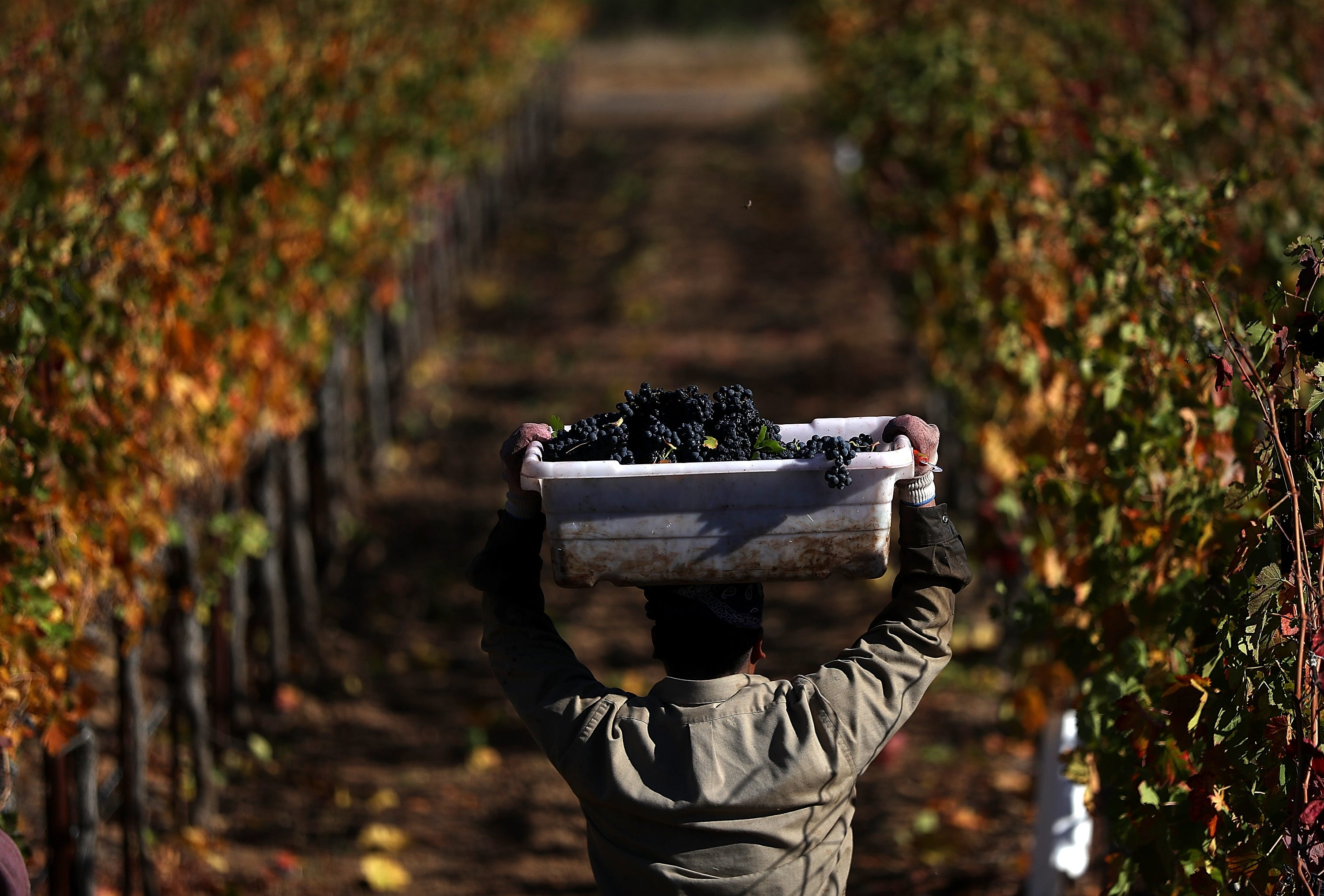 Wine country moves away from seasonal workers, towards fulltime employment