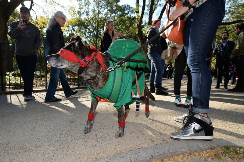 Halloween dog parade in NYC