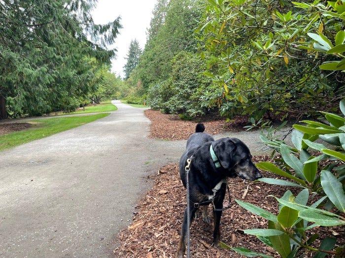 My dog Hazel in the Arboretum