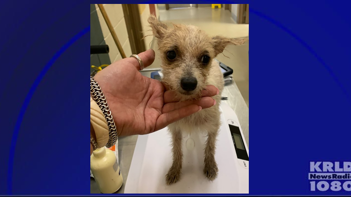 Mesquite Animal Services rescues 111 dogs