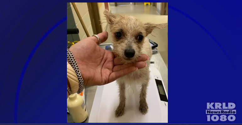 Mesquite rescues 111 dogs
