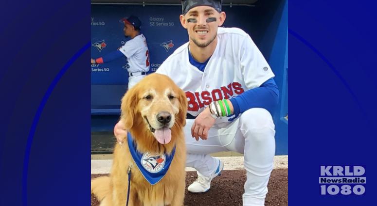 Dog interrupts Minor League Baseball game in New York