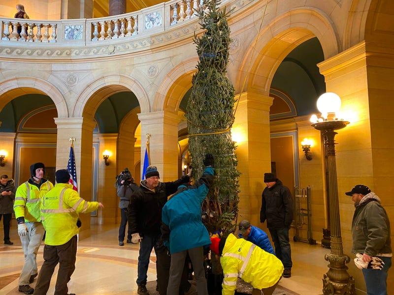 A Christmas Tree in the Capitol Rotunda