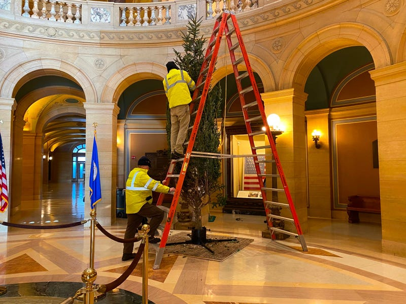 A 17-foot tall Fraser fir from Happy Land Tree farm in Sandstone, Minn, has found a home in the Capitol Rotunda.
