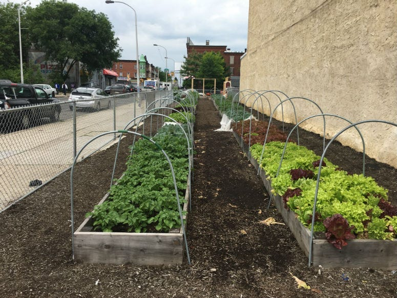 A garden at 22nd Street and Cecil B. Moore Avenue.