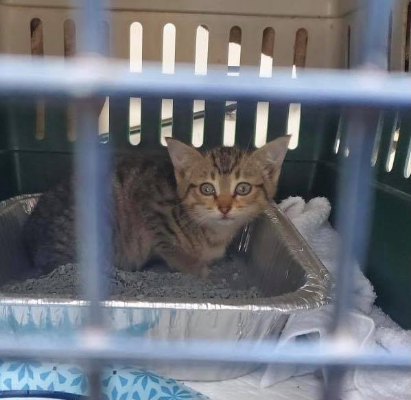 Troy police rescued a kitten from an engine