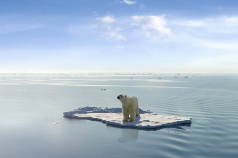 Last Polar Bear Coldimages / Getty Images
