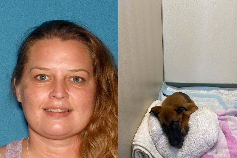 Jodi Wazniak and one of the German Shepherd / Belgian Malinois puppies that is currently being treated for the Parvo virus at the Linwoood Animal Hospital.