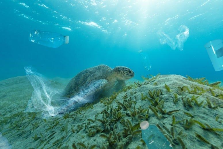 Ocean Plastics Turtle Getty Images Jag_cz