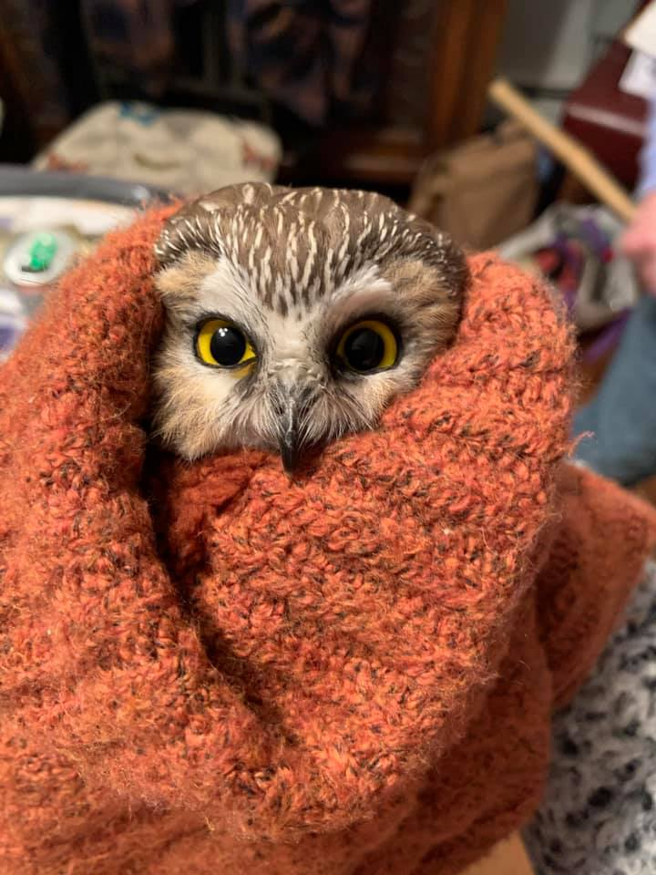 This owl was found inside the 2020 Rockefeller Center Christmas tree.