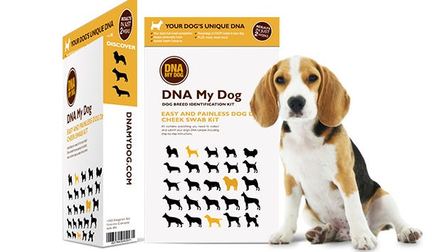 Get to know your furry family member on a whole new level with this canine DNA test