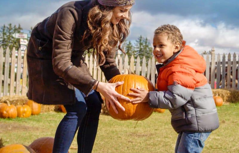 pumpkin picking