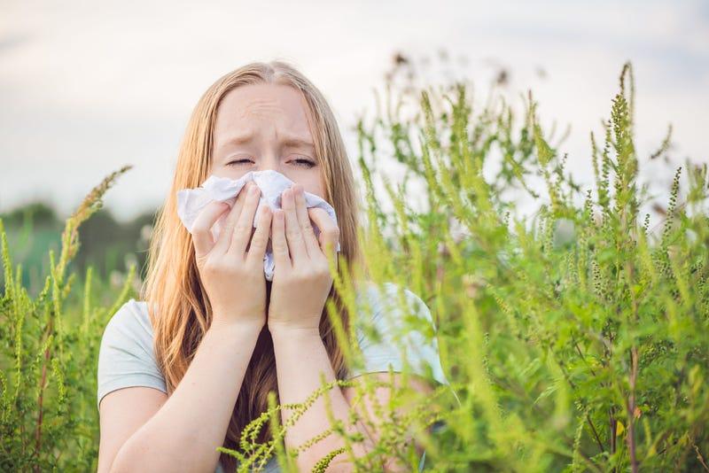 Ragweed, Allergies, Pollen