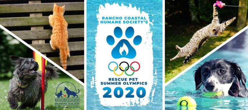 Rescue Pet Summer Olympics 2020