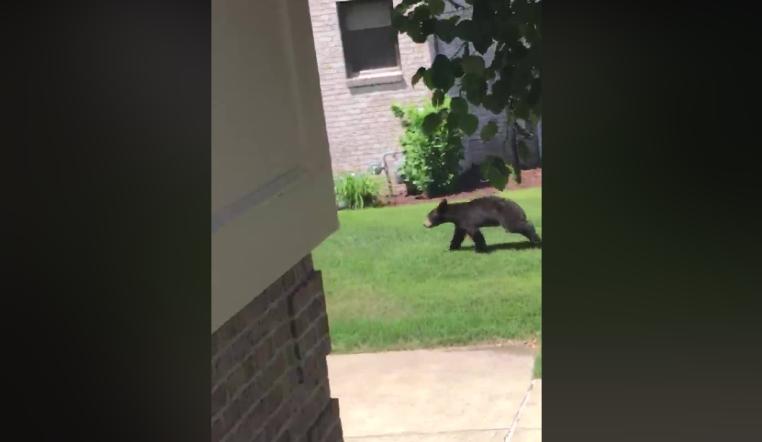 Ross Township Bear