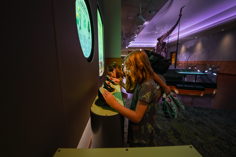 Experience SUE the T. rex like never before with new multisensory additions to the iconic dinosaur's suite in the Field Museum's Griffin Halls of Evolving Planet exhibition.
