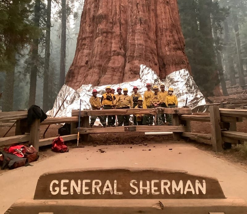 Firefighters on the KNP Complex at Sequoia National Park used structure wrap to protect the General Sherman Tree.