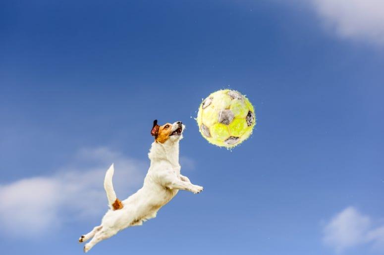Soccer_Dog