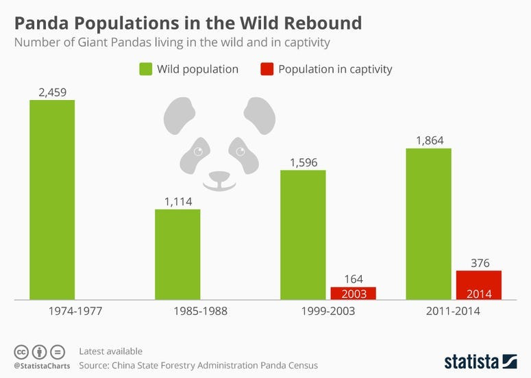Panda Populations in the Wild Rebound