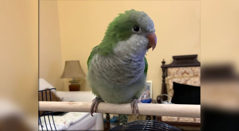 Sunny the parrot