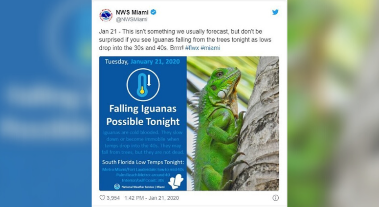 National Weather Service warns of falling iguanas
