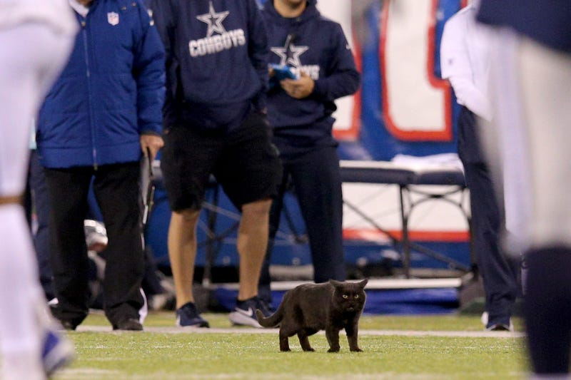 Black Cat at Cowboys vs Giants