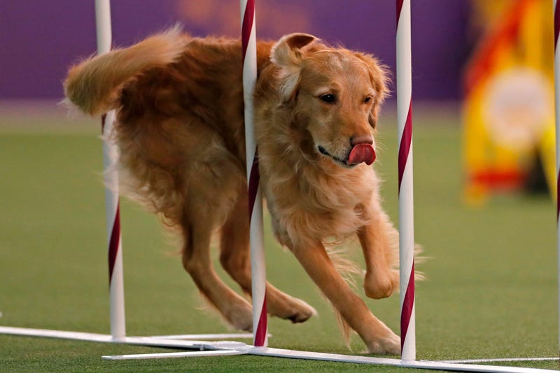44th Annual Westminster Kennel Club Dog Show