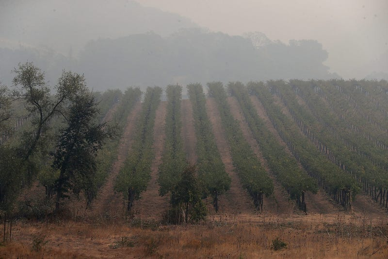 Grape growers are hoping for the best after weeks of smoke blanketed vineyards