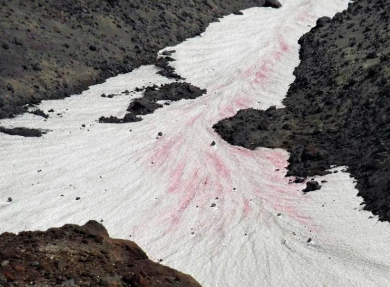 """Mount St. Helens mountain climbers noticing """"Watermelon Snow"""""""