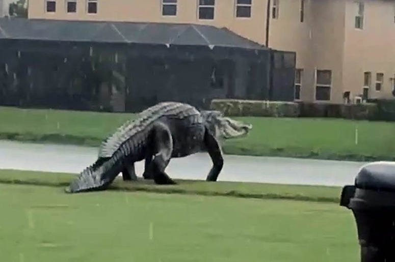 Some are calling it Godzilla