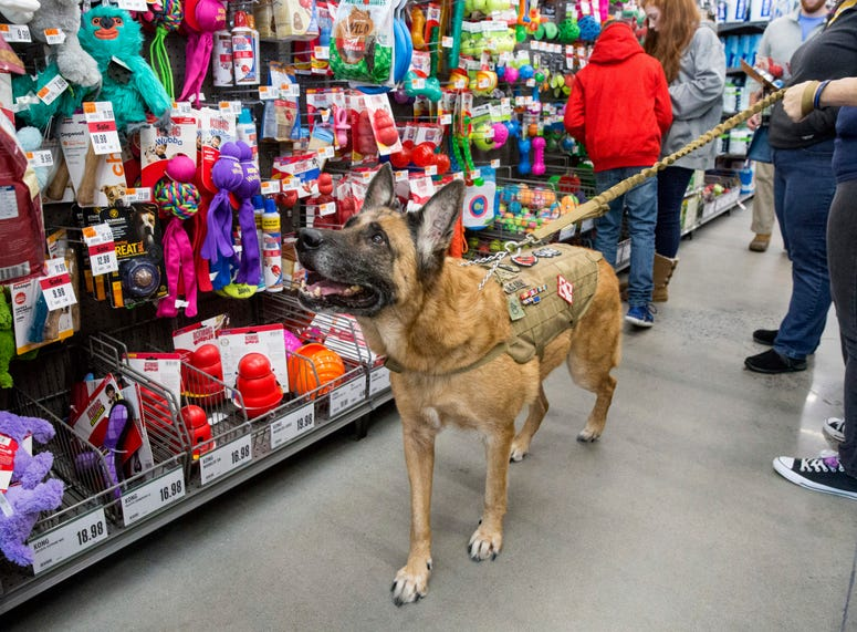 Staff Sgt. Agbar, a retired war dog, looks for a new toy during a visit to Pet Supplies Plus