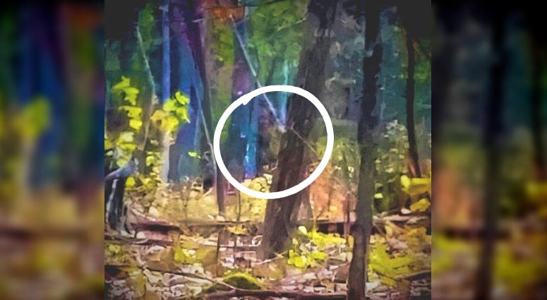 Marine Corps veteran captured an image of what some believe to be the mysterious Bigfoot