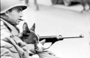 Tec 4 S. Medeiroa, of the Army's 26th Division, holds the unit's mascot, Little Joe - Germany on March 21, 1945