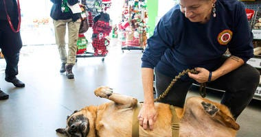 Staff Sgt. Agbar, a retired war dog, has his belly rubbed during a visit to Pet Supplies Plus