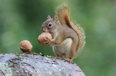 Nuts & Berries Raffle Event