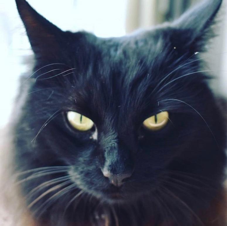 Salem. Pure, unadulterated E-v-i-l!