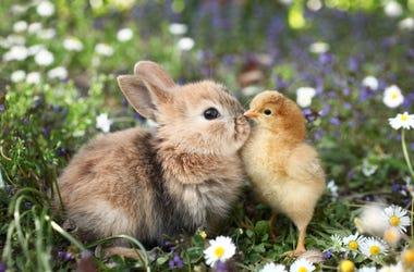 Bunny and bird